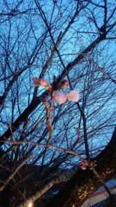 3月31日 法人お花見②